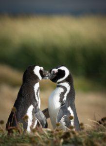 Foto-unsplash.com Pingvīni.